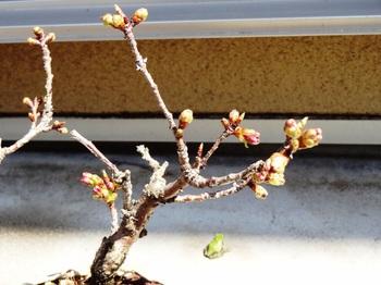20120415_garden02.JPG