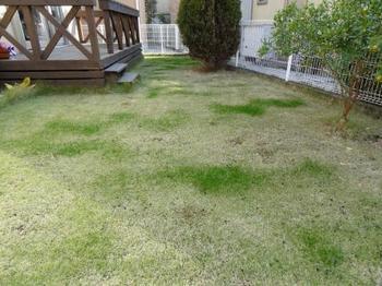 20121124_Lawn.jpg