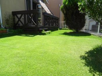 20140802_Lawn01.jpg