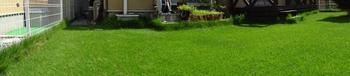 20140815_Lawn1.jpg