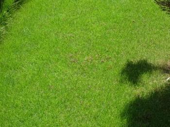20140815_Lawn2.jpg