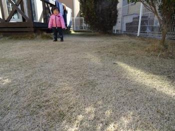 20150221_Lawn01.jpg