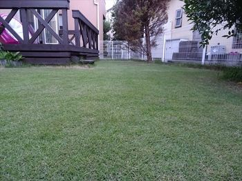 20160731_Lawn.JPG
