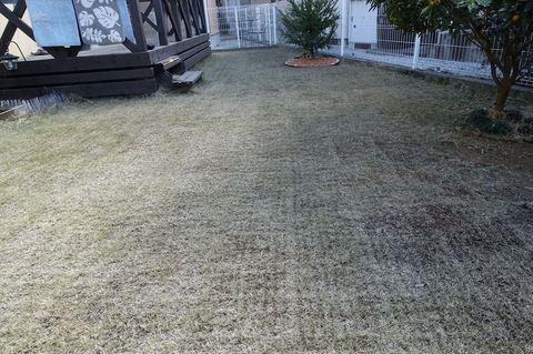 20180218_Lawn3.JPG