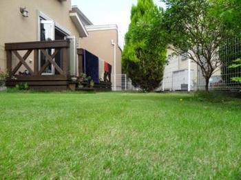 21020617_Lawn.JPG